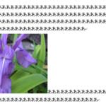 イラストや写真の位置調整 wordの基本操作「画像」編